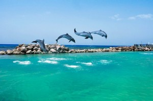 Dolphins at water park